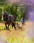 KA_150730_220 / Equus caballus / Hest