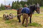 KA_150730_91 / Equus caballus / Hest