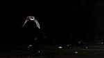 KA_150821_11 / Myotis daubentonii / Vannflaggermus