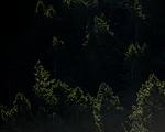 KA_160817_148 / Haliaeetus albicilla / Havørn