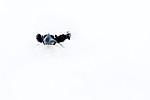 KA_180305_127 / Lagopus muta hyperborea / Svalbardrype