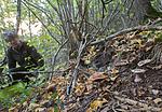 SIG_2635 / Cortinarius saporatus / Skrentslørsopp <br /> Cortinarius suaveolens / Lilla jordbærslørsopp