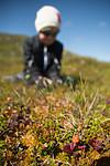 SIG_9464 / Rubus chamaemorus / Molte