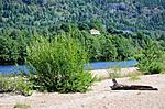 SIR_2398 / Salix daphnoides / Påskepil <br /> Salix daphnoides