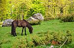 SR0_2698 / Equus caballus / Hest