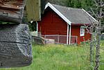 _SRE7830 / Cyphelium inquinans / Gråsotbeger