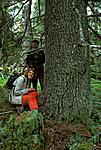bb019 / Picea abies / Gran