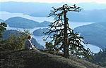 bb162 / Pinus sylvestris / Furu