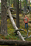 bb554 / Pinus sylvestris / Furu