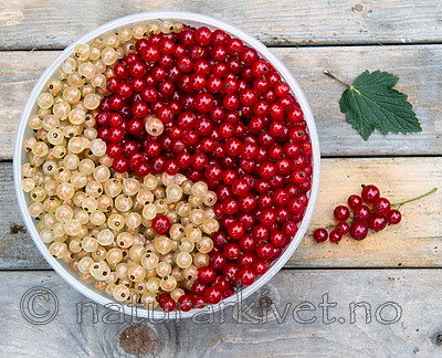 BB_20160807_0008 / Ribes rubrum / Hagerips