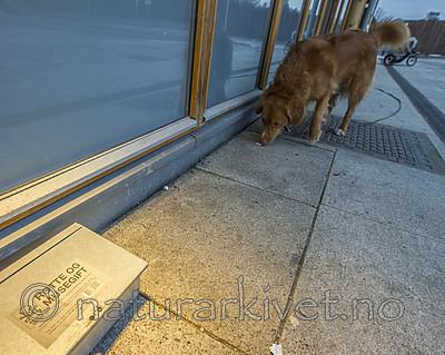 BB_20181223_0003 / Canis lupus familiaris / Hund