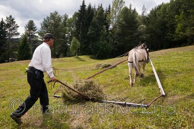 KA_06_1_0905 / Equus caballus / Hest