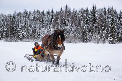 KA_130208_1056 / Equus caballus / Hest