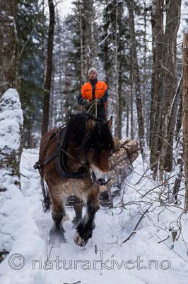KA_130208_1093 / Equus caballus / Hest