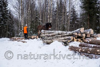 KA_130208_1114 / Equus caballus / Hest