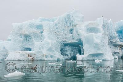 KA_140610_2098 / Fulmarus glacialis / Havhest