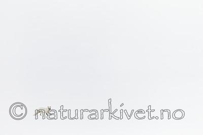 KA_140612_3816 / Vulpes lagopus / Fjellrev