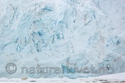 KA_140613_4136 / Ursus maritimus / Isbjørn