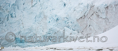 KA_140613_4138 / Ursus maritimus / Isbjørn