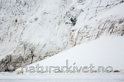 KA_140613_4144 / Ursus maritimus / Isbjørn