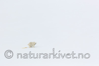 KA_140613_4158 / Ursus maritimus / Isbjørn