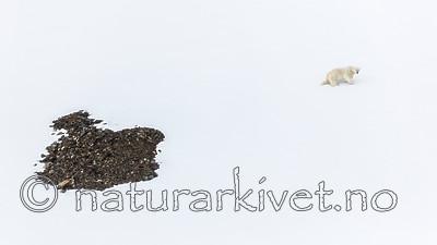 KA_140613_4168 / Ursus maritimus / Isbjørn