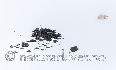 KA_140613_4176 / Ursus maritimus / Isbjørn