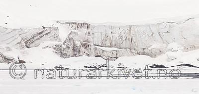 KA_140614_4641 / Ursus maritimus / Isbjørn