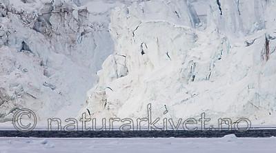 KA_140614_4644 / Ursus maritimus / Isbjørn