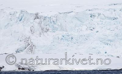 KA_140614_4647 / Ursus maritimus / Isbjørn