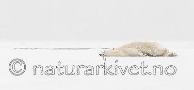 KA_140614_4706 / Ursus maritimus / Isbjørn