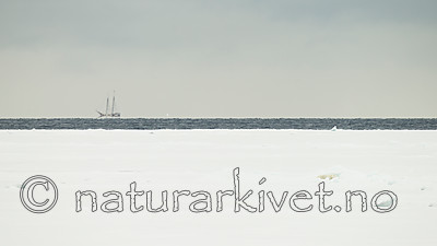 KA_140614_4777 / Ursus maritimus / Isbjørn