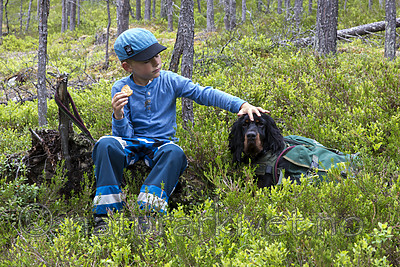 KA_150707_1 / Canis lupus familiaris / Hund