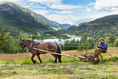 KA_150730_141 / Equus caballus / Hest