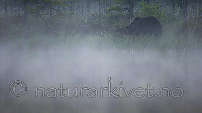 KA_160626_172 / Ursus arctos / Brunbjørn