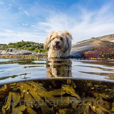 KA_160722_10 / Canis lupus familiaris / Hund
