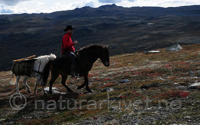 SR0_0884 / Equus caballus / Hest