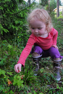 SR0_4075 / Fragaria vesca / Markjordbær