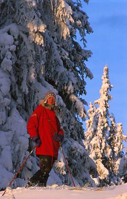 bb156 / Picea abies / Gran