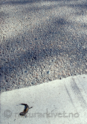 scansig_2012_4 / Lissotriton vulgaris / Småsalamander